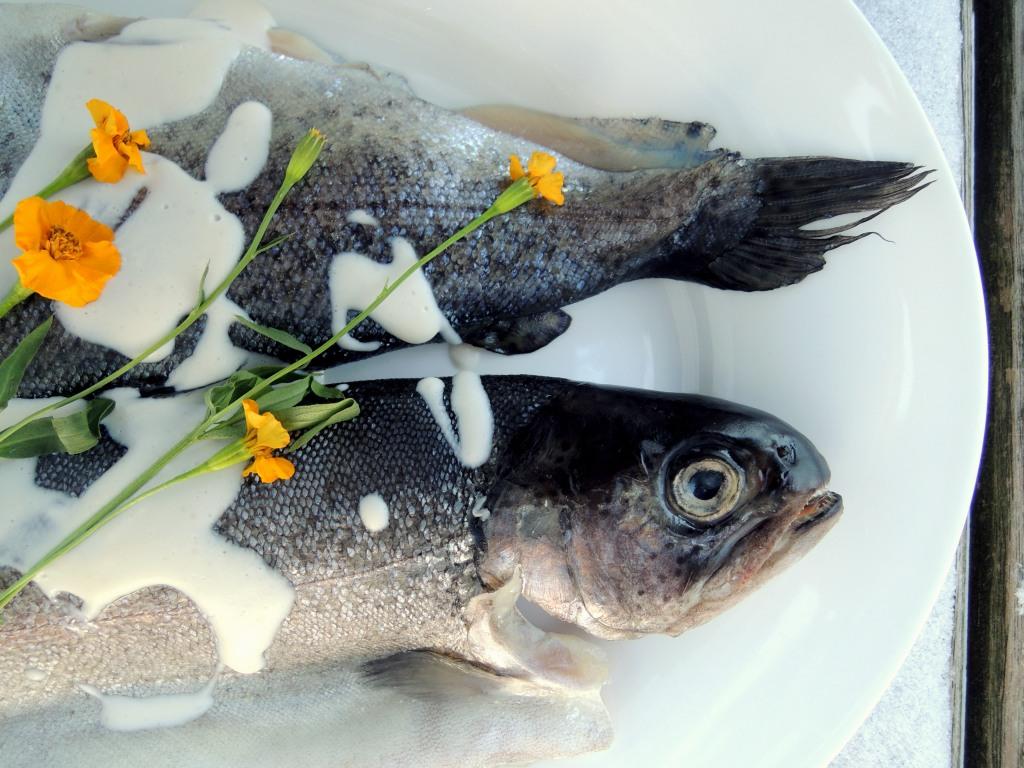 Fish, trout, truites Normandes a la creme et a l'estragon 2